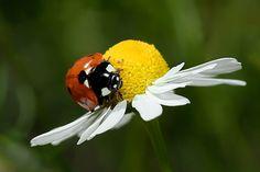 Vive la Vie.... by Roeselien Raimond, via Flickr