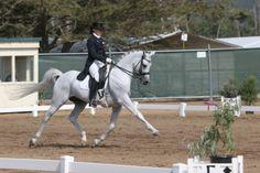 OKW Entrigue +++// Arabian Stallion (Allience x Ekspresja, Bandos)