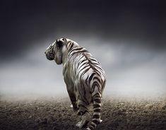 Photo Manipulation, Digital Art, Behance, Photoshop, Profile, Animals, Gallery, Check, User Profile