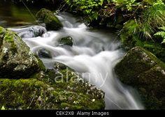 Foreststream