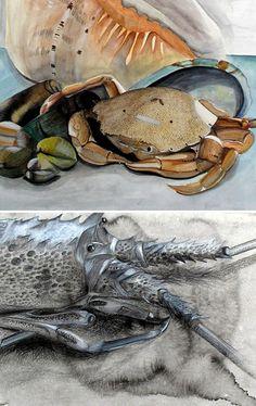 drawing of crustaceans - IGCSE Art