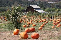 Bates Nut Farm, Valley Center, CA.....childhood pumpkin patch :)