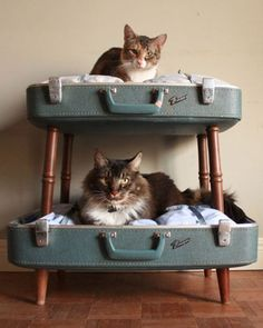 storagegeek: Amazing pet beds from Etsy shop SalvageShack! Loving the double decker converted suitcase pet beds. She has a way with salvaged materials as anyone browsing her sold items would agree. Cat Bunk Beds, Old Suitcases, Cat Room, Crazy Cats, Dog Bed, Cats And Kittens, Cute Cats, Cat Lovers, Cute Animals