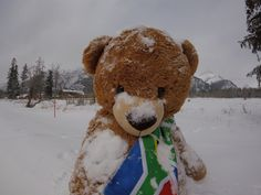 Teddy playing in the snow