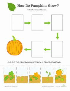 Fall Kindergarten Plants, Animals & the Earth Worksheets: Pumpkin Life Cycle Worksheet