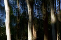 """""""blue hair"""" von Bernd Hoyen #fotografie #photography #fotokunst #photoart #digitalart #kunst #art #baum #bäume #tree #trees #abstrakt #abstract #rot #red #verwischung #verwischt #blurred #unscharf #blurring #verschwommen #blurry #natur #nature #deutschland #germany #saarland"""