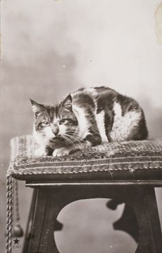 kattenkaarten123 | by roger.laute Vintage Pictures, Old Pictures, Animal Pictures, Cats And Kittens, Kitty Cats, Cat Photography, Beautiful Cats, Beautiful Things, Dog Memorial