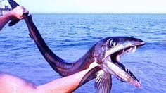 ovnis y fenomenos paranormales: Capturan pez caníbal en Carolina del Norte