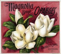 Magnolia Brand Oranges crate label