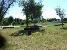 Adamclisi Trunks, Plants, Drift Wood, Flora, Plant, Planting