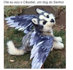 Cute husky w/ wings Baby Animals Pictures, Cute Animal Photos, Cute Animal Drawings, Baby Animals Super Cute, Cute Little Animals, Cute Funny Animals, Cute Fantasy Creatures, Mythical Creatures Art, Cute Puppies