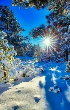 Beautiful nature with the sun glistening through on the beautiful snowfall. Winter Magic, Winter Snow, Landscape Photography, Nature Photography, Travel Photography, Winter Wallpaper, Winter Scenery, Winter Sunset, Snow Scenes