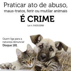 HELLBLOG: MALTRATAR ANIMAIS É CRIME, DENUNCIE.