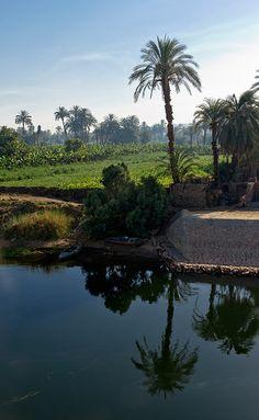 Le long de la rive du Nil