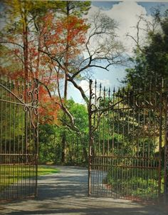 Simple gate but beautiful view.