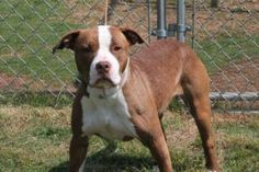 Bella: Escape artist fence jumping beauty back on death row at high-kill shelter