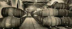 Resultado de imagem para adega vinho porto