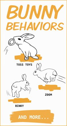 Learn everything there is to know about rabbit body language and those adorable bunny behaviors with this complete illustrated guide. Pet Bunny Rabbits, Baby Bunnies, Cute Bunny, Bunny Bunny, Rabbit Life, Silly Rabbit, Pet Rabbit, Rabbit Anatomy, Rabbits