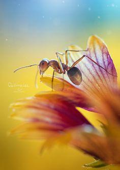 ant on a flower, lovely shot