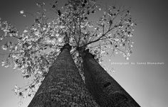 Colorless Beauty, Photography by Sunny Bhanushali ©2010