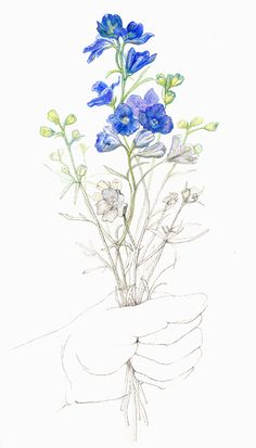 Sarah Melling: Pencils and Paper: July 2011 - Larkspur - July's flower - tattoo inspiration