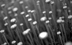 Más de 5.000 fotografías profesionales en Blanco y Negro visitando nuestro sitio web:  https://galeriaiconic1.wixsite.com/theiconic  https://galeriaiconic2.wixsite.com/theiconic  https://galeriaiconic3.wixsite.com/theiconic  https://galeriaiconic4.wixsite.com/theiconic  https://galeriaiconic5.wixsite.com/theiconic