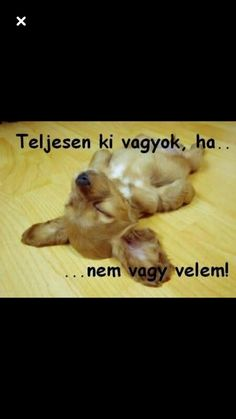 Morning Greeting, True Love, Animals And Pets, Funny, Quotes, Animales, Real Love, Pets, Quotations