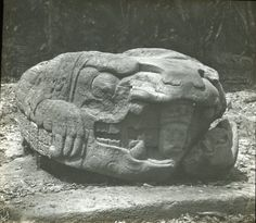 Zoomorph G, monolithic animal, north face; near the eastern border of the Great Plaza. Quiriguá, Guatemala. Photographed by Dr Alfred Percival Maudslay in 1890. -British Museum-