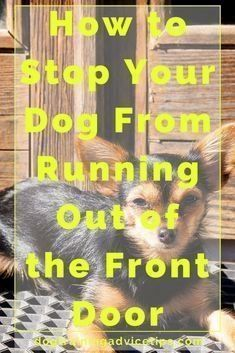 How to Stop Your Dog From Running Out of the Front Door Dog Training Tips Dog Obedience Training Dog Training Commands via Basic Dog Training, Puppy Training Tips, Training Dogs, Potty Training, Crate Training, Training Online, Training School, Pitbull Training, Training Quotes