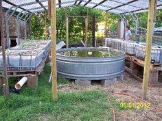 backyard aquaponics set up