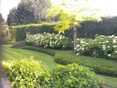 Garden Trees, Terrace Garden, Lawn And Garden, Moon Garden, Dream Garden, Contemporary Landscape, Landscape Design, Back Gardens, Outdoor Gardens