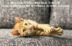 Máme rádi kočky   Kdyby kočky uměly mluvit, co by nám poradily