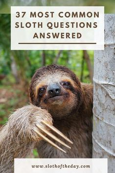 Sloth Questions (37+) Questions About Sloths Answered Most Common, Sloths, Funny Animals, Weird, Funny Animal, Hilarious Animals, Funny Animal Comics, Lemur, Humorous Animals