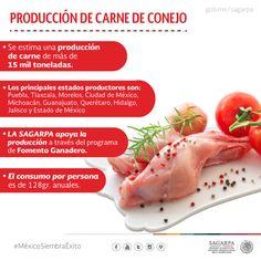 Producción de Carne de Conejo. SAGARPA SAGARPAMX #MéxicoSiembraÉxito