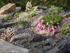 Class 1 - Alpine Garden Society Online Show, 2012 - Alpine Garden Society