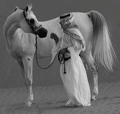 Arabian horse.... Nothing more more beautiful
