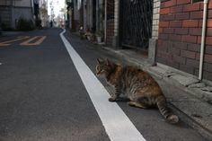 https://flic.kr/p/GCXwTL | cat patrolling | on a back street.