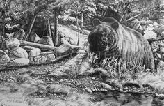 Native American, grizzly bear wildlife pencil drawing by western Artist Virgil C. Stephens