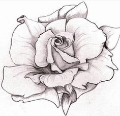 Rose Drawing - White Rose by Mary Simms Rose Sketch, Flower Sketches, Art Drawings Sketches, Tattoo Drawings, Pencil Drawings, Cool Rose Drawings, Horse Drawings, Floral Drawing, Drawing Flowers
