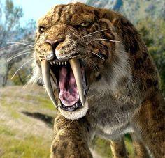 Tigre dientes de sable (esmilodón)
