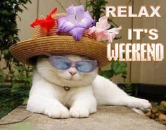 The weekend is the time to relax and forget about work. Oversleep this weekend. Happy Saturday everyone, Have a great day!