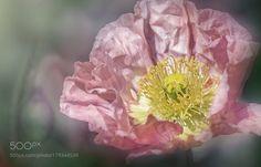 ..crushed silk by fainast #nature #photooftheday #amazing #picoftheday