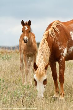 look at that mare - the color is gorgeous!