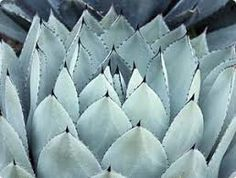 Agave Plants for Beauty & Easy Care - Gardening Basics - Miracle-Gro