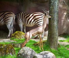 Portland Zoo | Flickr - Photo Sharing!