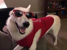 http://www.youtube.com/user/TheAnnDDDDD https://www.facebook.com/AlaskanNobleCompanion https://www.instagram.com/noblefarscape_ancd/ Alaskan Noble Companion Dog ANCD