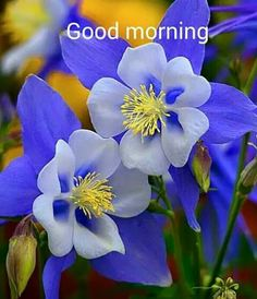 Beautiful Good Morning Flowers Quote morning good morning morning quotes good morning quotes morning quote good morning quote beautiful good morning quotes good morning wishes good morning quotes for family and friends