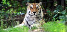 Animals, Animales, Animaux, Animal Memes, Animal, Animais, Dieren