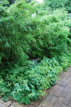 Bambu och daggkåpa i kombination Shade Garden, Garden Plants, My Fairy Garden, Garden Inspiration, Beautiful Gardens, Greenery, Garden Design, Outdoors, Lawn And Garden