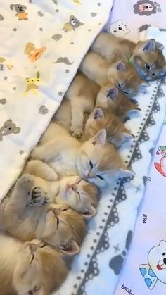 Cute Puppies And Kittens, Cute Baby Dogs, Baby Cats, Kittens Cutest, Funny Cute Cats, Cute Funny Animals, Funny Kittens, Cute Animal Videos, Cute Animal Pictures